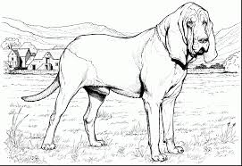 Fancy Design Dog Breeds Coloring Pages Best Coloring Ideas