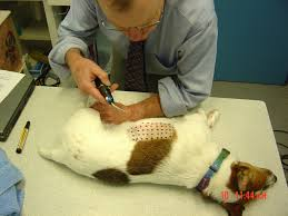 Itchy dogs - allergen hypersensitivity - Halifax Vet Centre