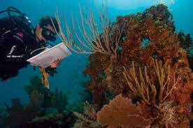 file coral bleaching jpg  file coral bleaching 14274360077 jpg