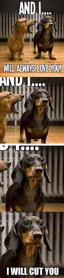 Funny Animal Picture Quotes