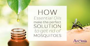 Wonderful Itu0027s No Secret That Pure Essential Oils Come With Several Benefits Ranging  From Treating Infections And Wounds To Being Used In The Medical Sphere Of  ...