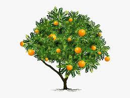 orange fruit tree png png