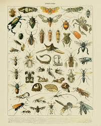 Vintage Insect Print French Insect Chart Biology Poster Insect Illustration Wall Art Home Decor Vi1004