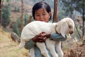 Image result for holding lamb