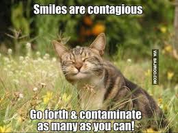 funny-cat-smile-meme | Bajiroo.com via Relatably.com