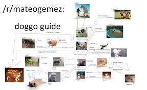 Doggo Encyclopedia Expanded Doggos