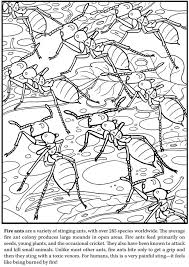 Stink Bug Deadly Coloring Pages Print Coloring