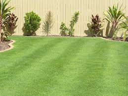 Grass Couch Queensland Blue Couch Turf Varieties Tinamba Turf
