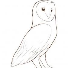 Small Picture How to Draw a Barn Owl Step by Step Birds Animals FREE Online