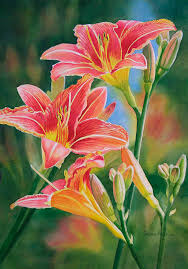 watercolor lilies painting vintage red orange lilies by sharon freeman