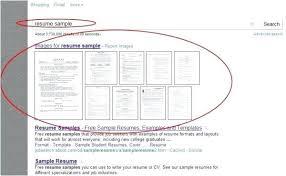 Fake Resume Example Fake Skills Put Resume What Should I On My Cool Fake Resumes