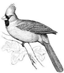 Small Picture Two Red Cardinals coloring page from Northern cardinal category
