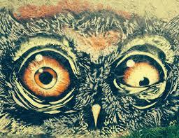 Crazy Painting Free Images Peak Animal Graffiti Owl Painting Chest Bird