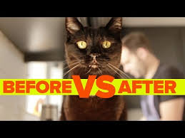 Without <b>Cat</b> Vs. With <b>Cat</b> - YouTube