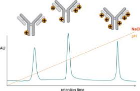 Ion Exchange Chromatography For The Characterization Of