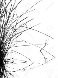 tall grass silhouette. Tall Grass Silhouette Black And White Stock Photo - 69046706 Y