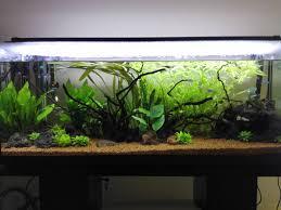 Fertilizzazione acquario appena avviato forum acquariofilia
