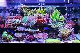 masanao shia sps acropora reef tank 2