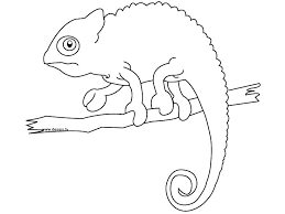 Cameleon Coloring Pages Chameleon Coloring Pages Advanced Coloring