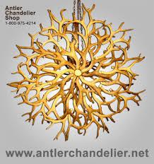 real antler yellowstone mule deer whitetail chandelier aplchnmdwt