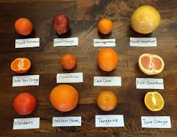 Mandarin Tangerines Know These 12 Citrus Varieties And When They Are In Season