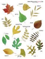 Fall Leaf Chart Fall Leaf Preschool Printables Classroom Charts Leaf