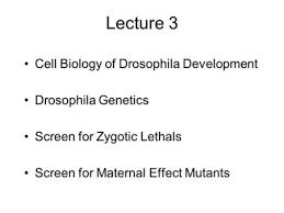 drosophila genetic laboratory ppt video online lecture 3 cell biology of drosophila development drosophila genetics