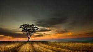 ... High Quality Lonely Tree Wallpapers | Full HD Backgrounds