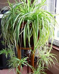 best office plants no sunlight. 10 Plants That Don\u0027t Need Sunlight To Grow Best Office No