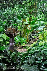 Small Picture 234 best Tropical Landscaping images on Pinterest Tropical