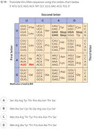 Dna Sequence Chart Solved 14 Translate This Dna Sequence Using The Codon Cha