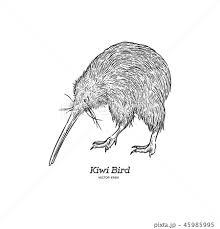 Kiwi Bird Hand Draw Sketch Vectorのイラスト素材 45985995 Pixta
