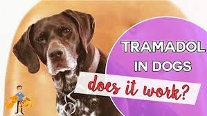 Can You Give Tramadol To A Dog In Pain Does It Really Work