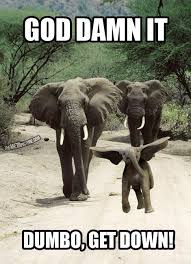 Elephant Quotes Cool Top 48 Most Funniest Elephant Quotes Funny Elephant Quotes