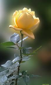Colouring Pictures Of Lotus Flowers L L L L L