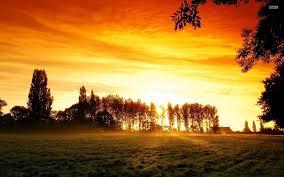 tall grass field sunset. Field Tall Trees Orange Sunset Wallpapers And Stock Photos Grass