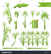 Sugar Design Sugar Cane Decoration Borders Steams Leaves Signs Symbols