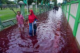 Red tide in Indonesia as flooding hits ...