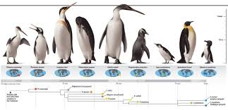 Penguin Size Chart World Of Printables Menu In Penguin