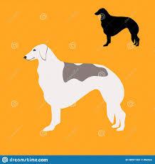 Greyhound Dog , Vector Illustration ...