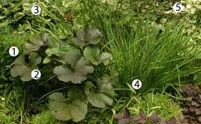 Small Picture 10 Combinations for Shade Fine Gardening