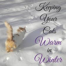 whether they re your beloved outside cats or just friendly ferals you care for