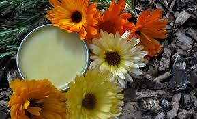 Image result for beautiful photos of rosemary salve