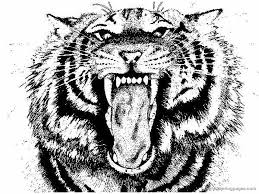 Small Picture Realistic Tiger Coloring Pages Coloring Coloring Pages