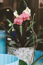 how to shop for pet-friendly houseplants + a DIY to keep your plants safe