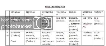 Bearded Dragon Nutrition Chart Is This A Good Feeding Plan For Koko My Bearded Dragon