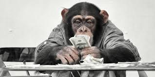 Image result for monkey money