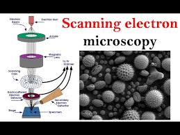 Electron Microscopy Lecture Scanning Electron Microscope Youtube