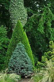 Small Picture 49 best Designs with Trees and Shrubs images on Pinterest