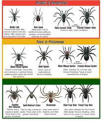 Spider Identification Chart Health Spider Identification